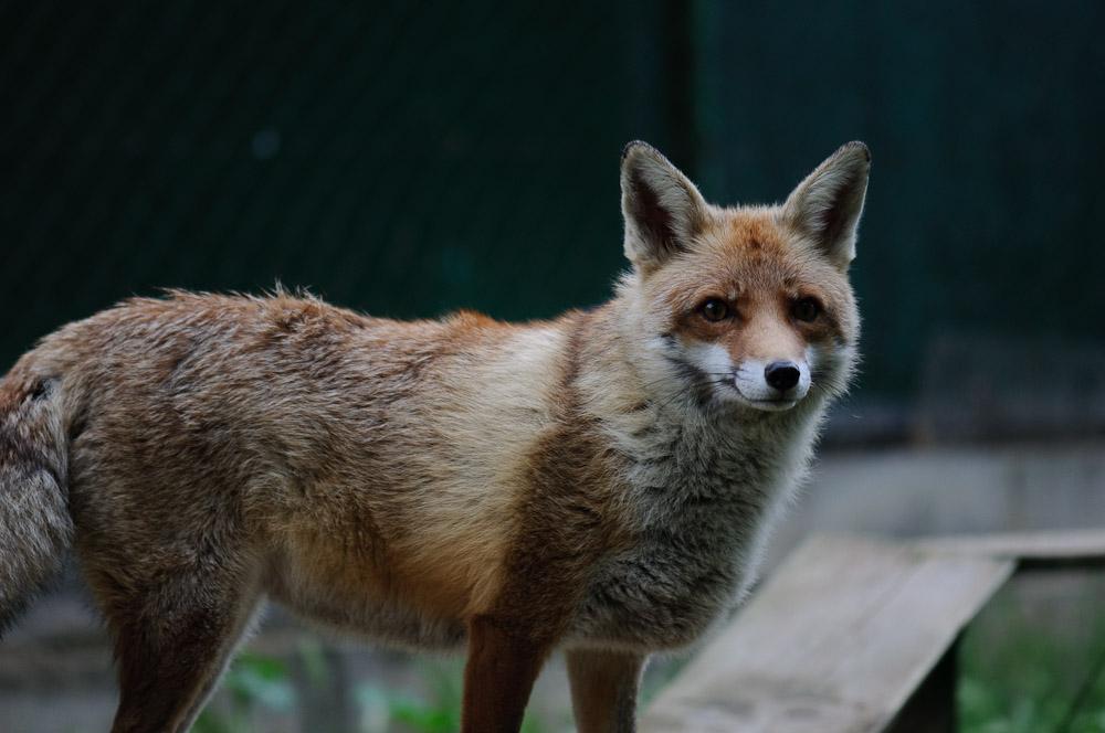 Centres de fauna salvatge i animals salvatges ferits