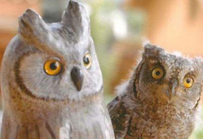 Centres de fauna salvatge i refugis d'animals a Catalunya